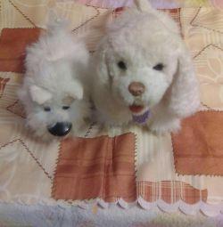Köpekler ikili için aktif