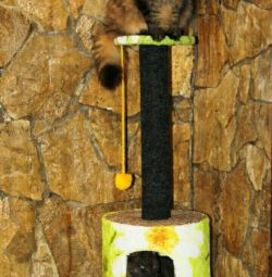 Cat lodges