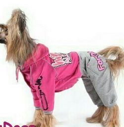 Sports suit (clothes for dogs)