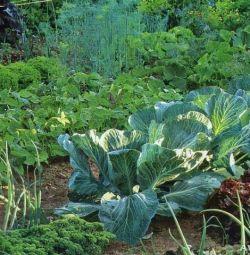 Κήπος λαχανικών