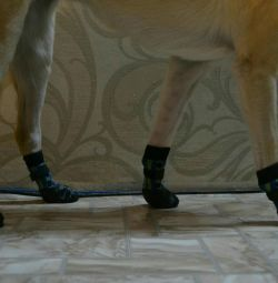 Socks for your pets!