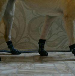 Evcil hayvanlarınız için çorap!