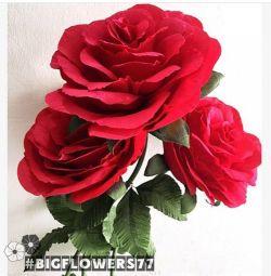 🌹Ростовые огромные розы
