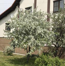 Cottage, 650 m²