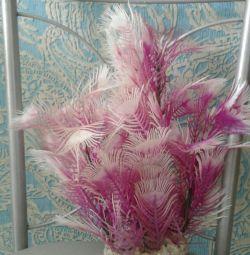 Beautiful plant for aqua or terrarium