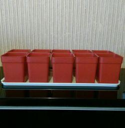 10 vase pentru răsaduri.
