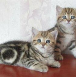 Сладкие котятки