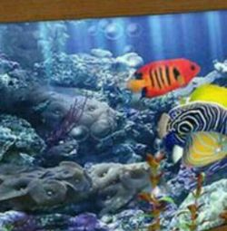 aquarium 500 liters. Spawner