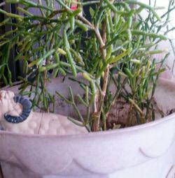 Indoor plant (mowing)