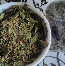 Prețul ceaiului Ivan pentru 1 kg