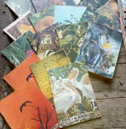 Journals young naturalist