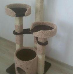 Yavru kedi, kedi kulübesi