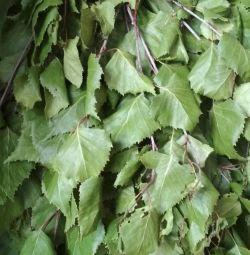 Σκούπα σημύδας