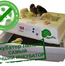 Incubators for bird or reptile eggs