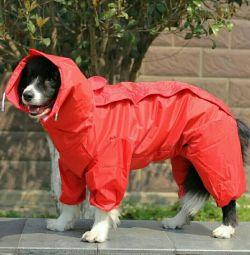 Новый комбинезон на собаку