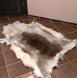 Deer piele