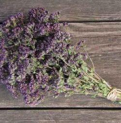 Душица (орегано) сушеные травы