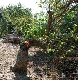 Yakacak odun kayısı