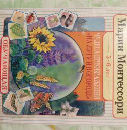 The Wonders of Transformation Maria Montessori