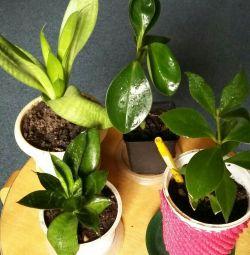Bitki satışı!
