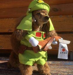 Costum de câine