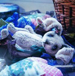 Teddy hare handmade toy