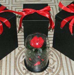 Τριαντάφυλλο σε κόκκινη φιάλη