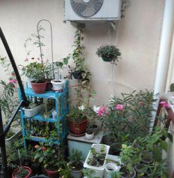 Εσωτερικά και φυτά κήπου
