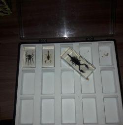 Colecție de păianjeni și 2 scorpioni în carcasa