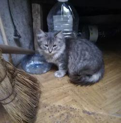 pisica a rămas fără stăpân pe stradă
