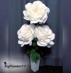 White Life Roses ?