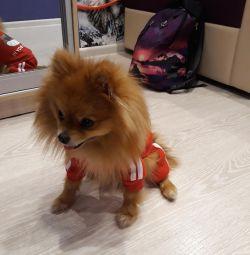 Dog Suits