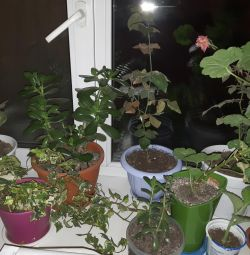 I will sell indoor plants in pots ...