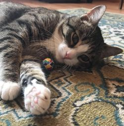 Pisica în mâinile bune