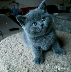De la pisica britanica
