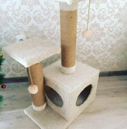 Small house with scratching of carpet