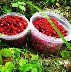 Άγρια φράουλα και βατόμουρο