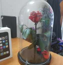 Rose in a flask