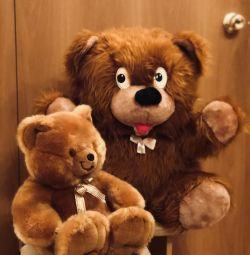 Αρκούδα (αρκούδα)