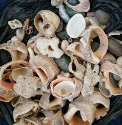 Seashells, corals