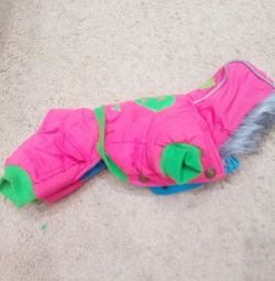 Jumpsuit for a small dog