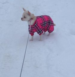 Winter jumpsuit for small breeds (xs times)
