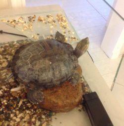 Turtle with aquarium