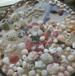 Όστρακα και κοράλλια από τον Περσικό Κόλπο