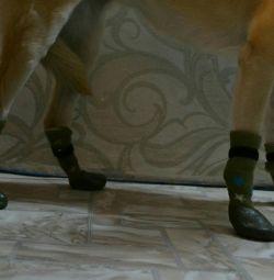 Ortalama bir köpek için çorap!