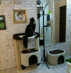 Bir ev ile sağım kedilerin karmaşık, tırmalamak