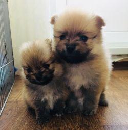 Маленькие комочки ждут своих новых мам и пап