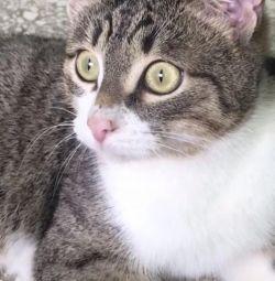 Pisica adolescenta