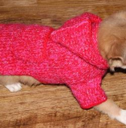 Knitted clothes for dogs