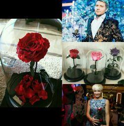 Роза в скляній колбі